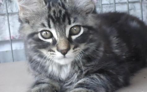 Save a Life and Adopt a Pet!