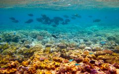 The Great Barrier Reef May Be Saved By Gene Editing