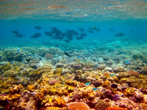 Hawaii Installs Ban to Help Protect Coral Reefs