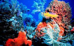 Hawaii Installs Ban to Help Protect Coral Reefs