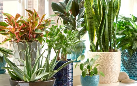 The Best Plants to Liven Up Your Space