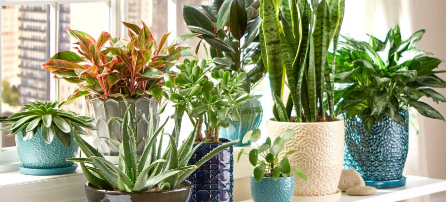 The+Best+Plants+to+Liven+Up+Your+Space