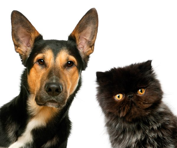 Pros and Cons of Cats vs Dogs