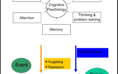 The Effects of False Memory