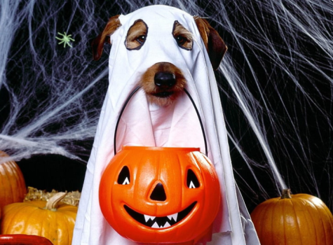 Too Old to Trick-or-Treat?